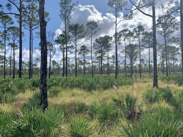 Martin-County-Florida-asset-wealth-management-firm